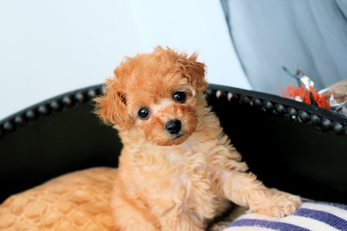 ♡new  puppy♡_d0060413_1621434.jpg