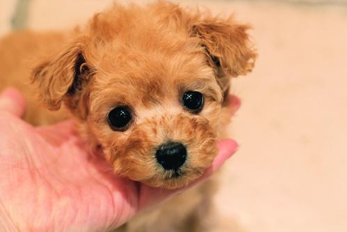 ♡new  puppy♡_d0060413_1622110.jpg