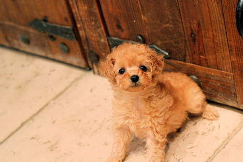 ♡new  puppy♡_d0060413_1622812.jpg