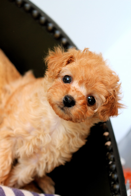 ♡new  puppy♡_d0060413_1623489.jpg