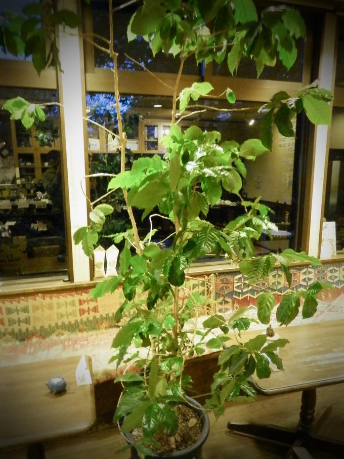 山口、萩「Coffee Tikal」へ~☆_a0125419_1049186.jpg