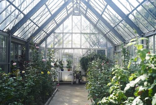 植物園へ行く_b0212922_13345176.jpg