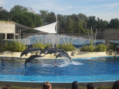(番外編)マドリッドの動物園!_e0120938_1849276.jpg