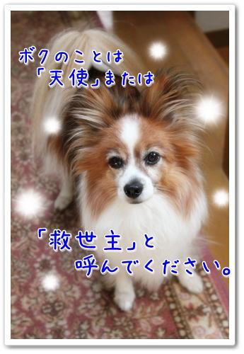 d0013149_22555199.jpg