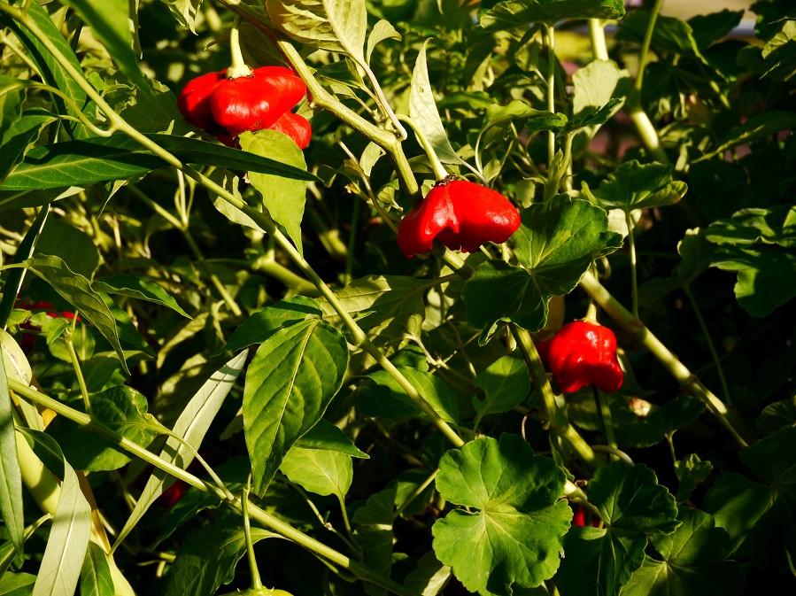 和歌山県植物公園緑花センター _b0093754_2127050.jpg