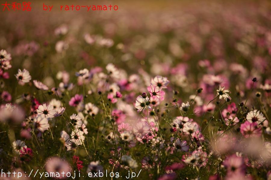 f0236776_10455598.jpg