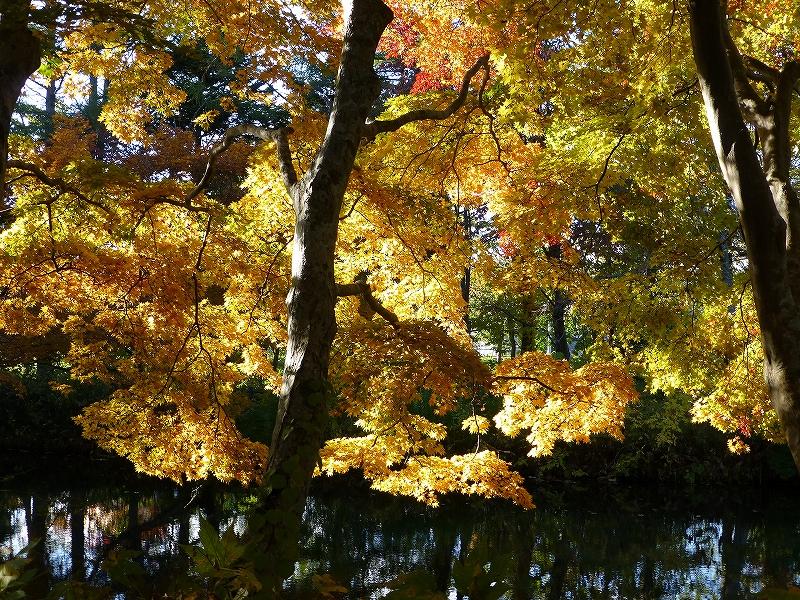公園と裏山で_f0138096_17334462.jpg