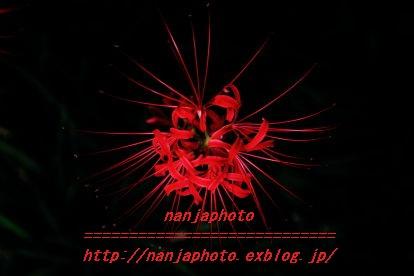 e0268999_17395390.jpg