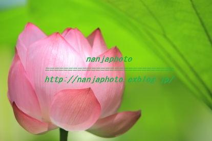 e0268999_17431118.jpg