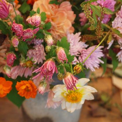 神無月 花を楽しむ会_d0011404_15284663.jpg