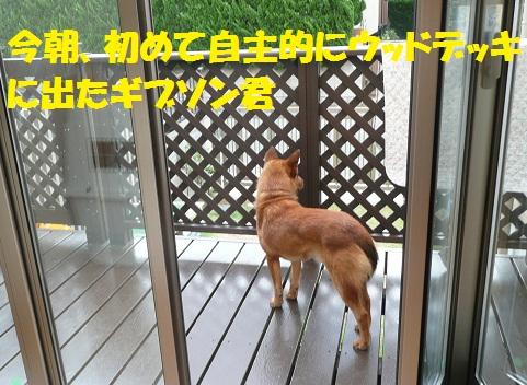 f0121712_15292911.jpg