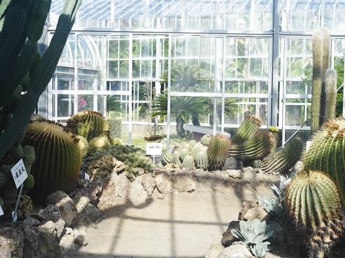植物園へ行く_b0212922_1110479.jpg