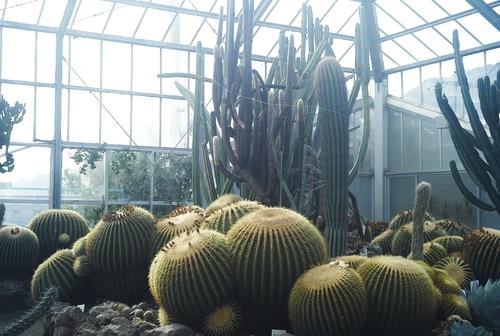 植物園へ行く_b0212922_1111933.jpg
