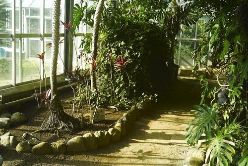 植物園へ行く_b0212922_11143161.jpg