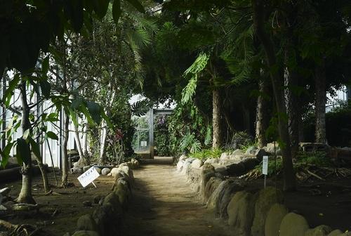 植物園へ行く_b0212922_11143220.jpg