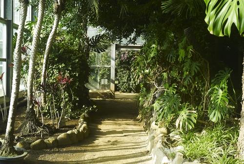植物園へ行く_b0212922_1117322.jpg