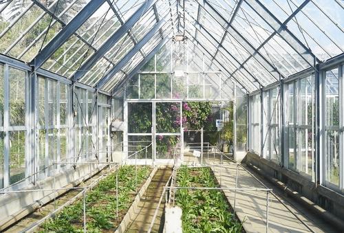植物園へ行く_b0212922_1153647.jpg