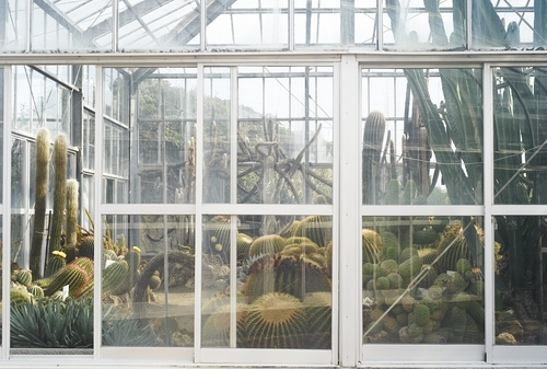 植物園へ行く_b0212922_1184046.jpg
