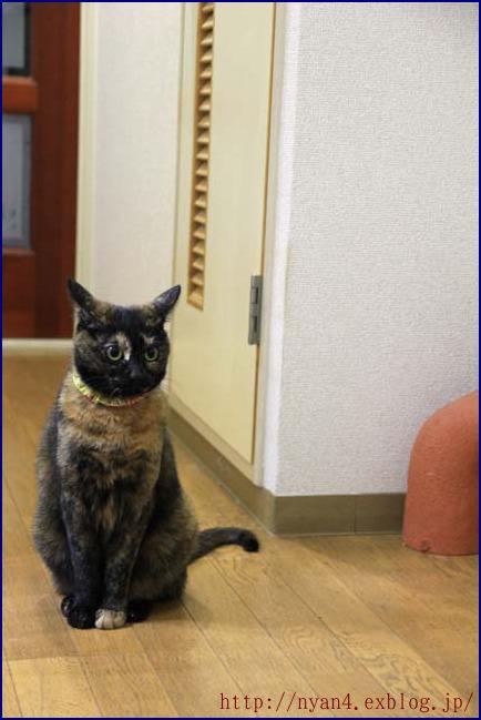 サビ猫ペコたん_f0166234_011990.jpg