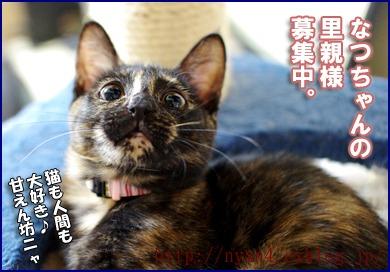 サビ猫ペコたん_f0166234_0283113.jpg