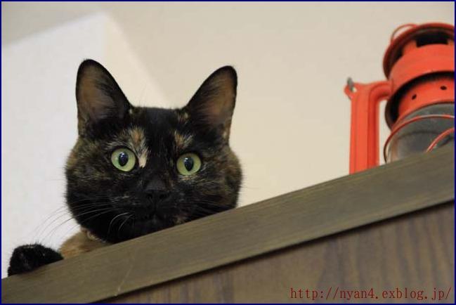 サビ猫ペコたん_f0166234_067100.jpg