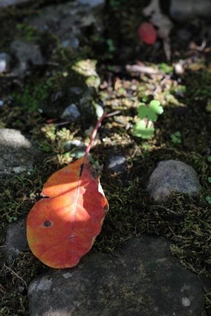 秋色の庭_b0132338_11531576.jpg