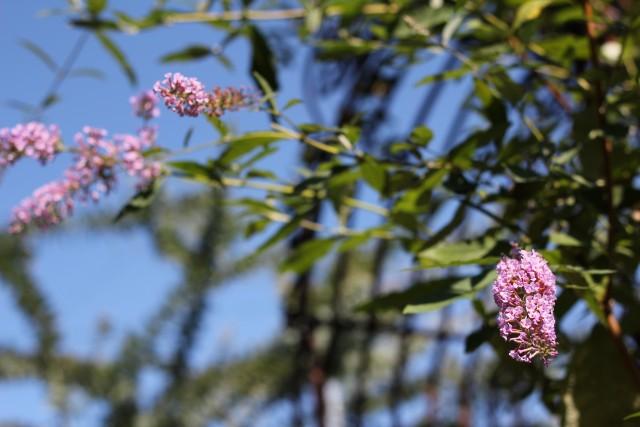 秋色の庭_b0132338_11532695.jpg