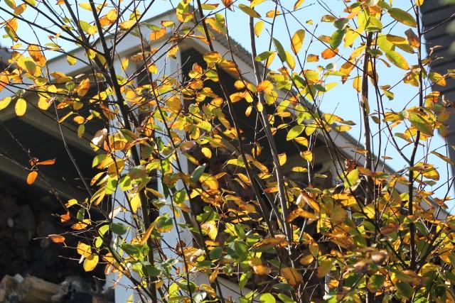 秋色の庭_b0132338_11534824.jpg