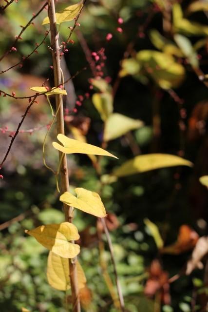秋色の庭_b0132338_1153514.jpg