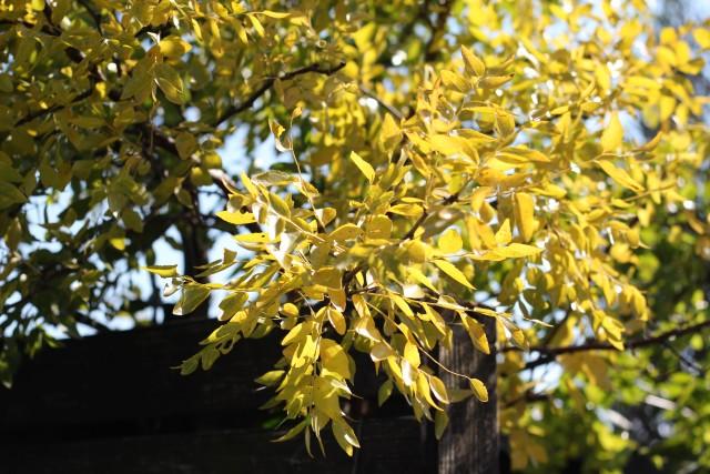 秋色の庭_b0132338_1153596.jpg