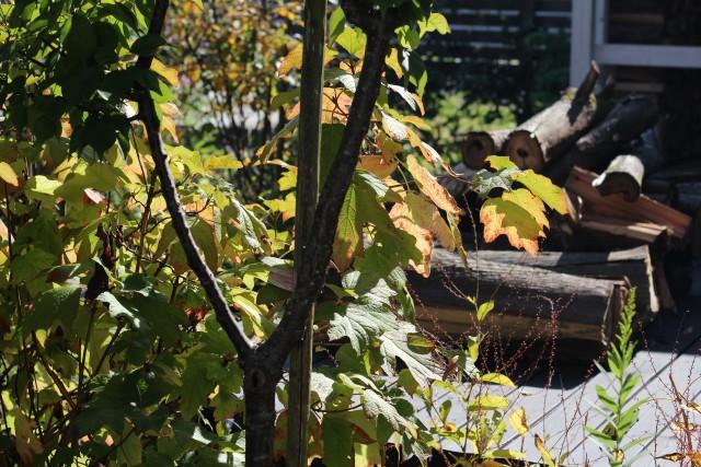 秋色の庭_b0132338_11542056.jpg