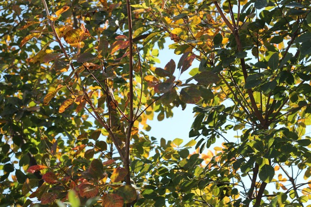 秋色の庭_b0132338_11543081.jpg