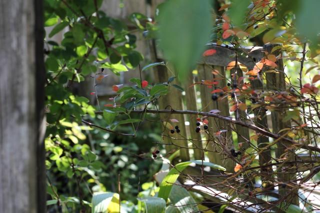 秋色の庭_b0132338_1154936.jpg