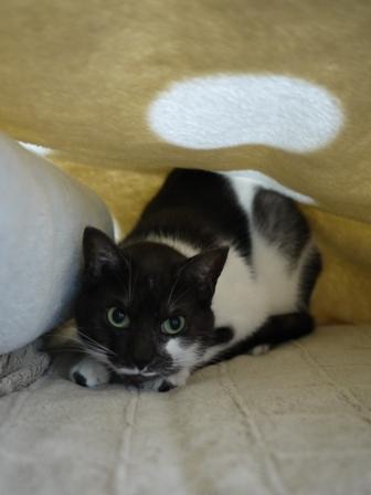 猫のお友だち リリィちゃんシュシュくん編。_a0143140_22555730.jpg
