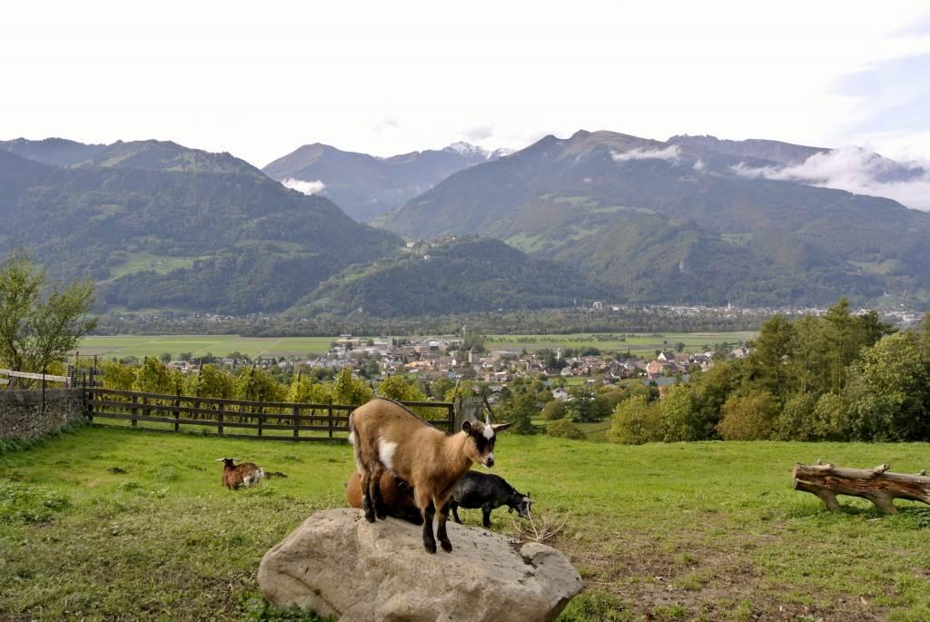 スイス紀行4:ハイジの村_a0148206_22282019.jpg