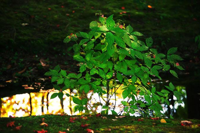 軽井沢 雲場池の紅葉1_a0263109_104135.jpg