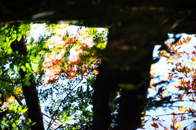 軽井沢 雲場池の紅葉1_a0263109_1041461.jpg