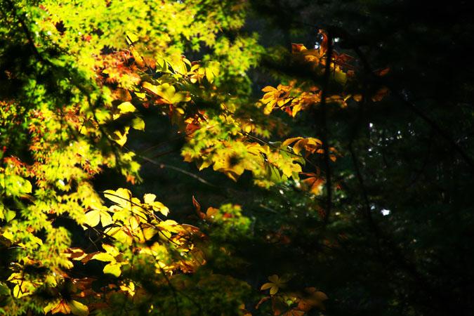 軽井沢 雲場池の紅葉1_a0263109_10415532.jpg