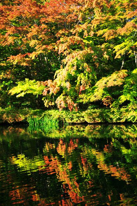 軽井沢 雲場池の紅葉1_a0263109_10424151.jpg