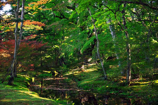 軽井沢 雲場池の紅葉1_a0263109_10424616.jpg