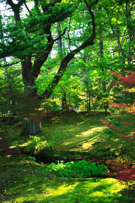 軽井沢 雲場池の紅葉1_a0263109_1047348.jpg
