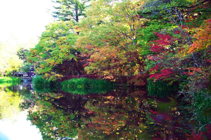 軽井沢 雲場池の紅葉1_a0263109_10473662.jpg
