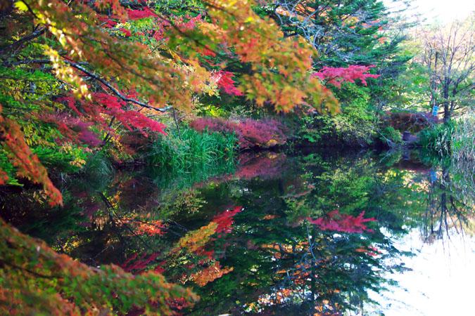 軽井沢 雲場池の紅葉1_a0263109_1048445.jpg