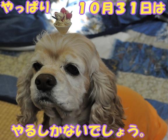 b0067012_17211779.jpg