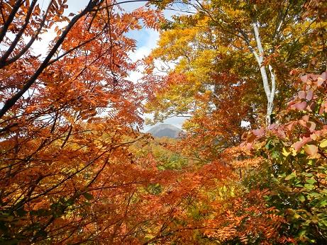 紅葉登山~念願の赤兎山③~_f0177714_16594528.jpg