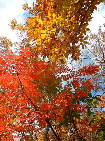 紅葉登山~念願の赤兎山③~_f0177714_170199.jpg