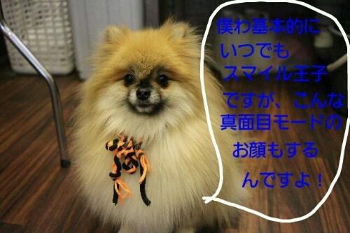 b0130018_20435111.jpg