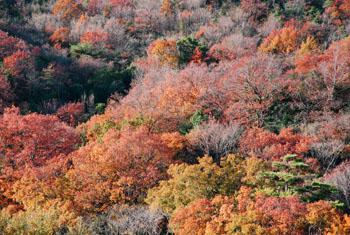 秋の六甲山_e0103024_22153860.jpg