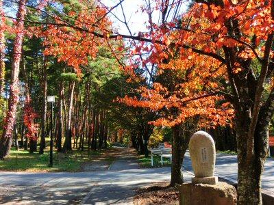 馬術競技場通りの紅葉が見頃です_f0019247_1702790.jpg