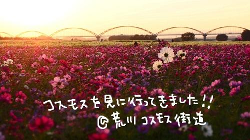 b0092580_12090.jpg